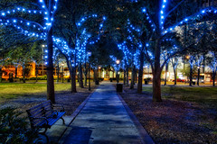 Tampa Christmas Lights