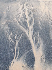 Sea Coal Art (Munki Munki) Tags: beach face images figure sands ephemeral redcar coatham southgare seacoal