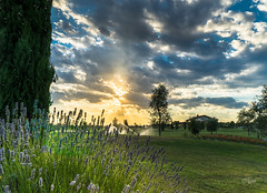 2016 Lavendel (jeho75) Tags: sony ilce 7m2 zeiss italien italy lavendel lavender sonnenuntergang sunset