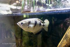 FujiXE2-0165 (QTTheory) Tags: cvg cincinnati ohio newport aquarium newportaquarium fujifilm fujinon xe2 xf 1855mmf284rlmois