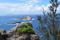 29-May 22 2016-Oahu HI-Makapu'u Summit (Barb Mayer) Tags: islands ocean pacificocean hawaii oahu makapuu