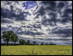 Thunderstorm In Spring (frankmartinroth) Tags: wide nature landscape clouds germany 35mm f20 sony rx1r rapeseed spring sonnart235