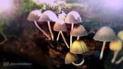 fairyland (photos4dreams) Tags: spaziergang walk feld wald wiese forest trees bume photos4dreams p4d photos4dreamz landschaft landscape pilz pilze fungi fungus mushroom mushrooms