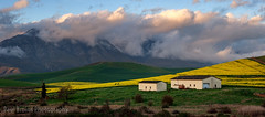 Greyton Farm Barn Panorama (Panorama Paul) Tags: paulbruinsphotography wwwpaulbruinscoza southafrica westerncape greyton overberg riviersonderendmountains canola barn clouds sunset nikond800 nikkorlenses nikfilters panorama