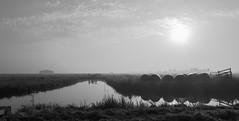 A foggy morning @ Nieuwer Ter Aa (PaulHoo) Tags: sun fog morning summer nieuwer ter aa holland netherlands lumix 2016 mist polder landscape bw blackandwhite farmland monochrome pano panorama