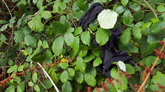 Aberteifi Hedge Pants (f) (Jacob Whittaker) Tags: aberteifi lost thrown discarded found dropped