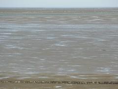 mudflats (achatphoenix) Tags: nessmersiel baltrum mud mudflat watt water wasser wattenmeer waddensea waterscape nordsee northsea island insel ostfriesischeinseln ostfriesland ebbeflut gezeiten tidal tide ferry