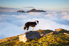 Searching for Neverland (svensl) Tags: scotland schottland torridon north west cloud inversion alligin highlands hiking summer sunrise bert border collie dog canine portrait conceptual