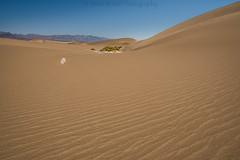 sandy times D75_6767 (steve bond Photog) Tags: deathvalley sand sanddunes california californialandscape go4it seetheworld getoffthecouch nikon nationalpark