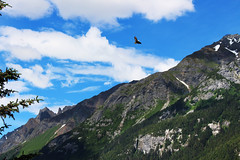 Eagle (rcaisi) Tags: alaska alaskancruise cruise helicopter snow snowy mountains summer eagle america american blueskies blue mountainrange