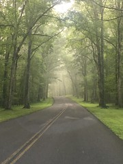 Misty Morning Road (cliffordswoape) Tags: park travel roadway mystic dreamy beauty usa treelined trees forest montgomerybellstatepark statepark montgomerybell tennessee dickson burns road morning misty