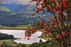 Round Wales Walk 43 - Through Rowan, Across the Dovey (Nikki & Tom) Tags: roundwaleswalk walescoastpath wales ceredigion uk rowan tree river dovey hills views