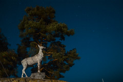 One of a kind (mark.voronov) Tags: estonia sculpture animal deer beach sky tree outside stars cosmos peace love calm dark nighr night