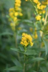 Sunny (ianharrywebb) Tags: edinburgh iansdigitalphotos royalbotanicgardens flowers flower