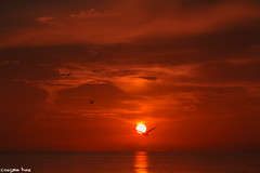 Sunsets are proof (gusdiaz) Tags: sunset sundown atardecer cape haze florida amazing beautiful water sand ocean birds seagulls nature vacation summer september