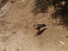 P2230367 (Gareth's Pix) Tags: aviarionacionaldecolombia baru colombia aviario bird