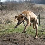 flying dog thumbnail