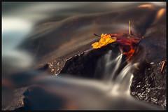 Won't Let Go (phenix) Tags: longexposure autumn fall water leaves rock creek river leaf rocks minolta d sony apo flowing delaware wilmington polarizer hoya a77 brandywine 100300mm nd8 nd16 brandywinepark slta77