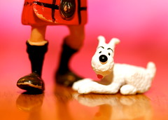 A dog and his boy (Hannhell) Tags: dog toys snowy mini belgian tintin milou herge comicbookcharacters