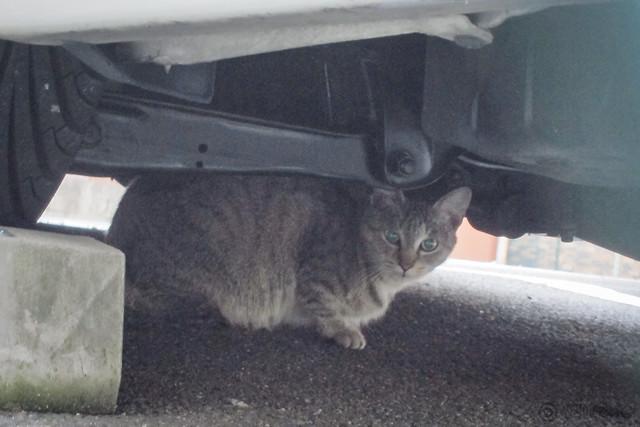 Today's Cat@2012-11-14