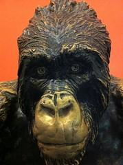 Gorilla Gorilla (Photonemotion) Tags: nyc travel art face statue museum bronze gorilla tired worn expressive museumofnaturalhistory iphone nyc2012 ilovenyc uniquenewyork i3nyc iphone4 iphonography gyokeres
