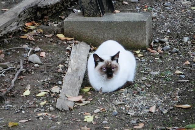Today's Cat@2012-11-20