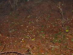 FUJI20121122T115548.JPG (Robert.BlueSky) Tags: fall fog europe trail slovakia 2012 janka jesen banska bystrica hmla chodnk sachticka achtika nun