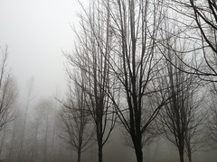 On campus. (SrslyKris) Tags: cameraphone fog vancouver landscape sfu burnaby burnabymountain iphone iphone4s kmphot