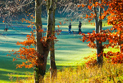 Sunny morning (Steve-h) Tags: park november autumn trees ireland people dublin orange brown sun sunlight men green art tourism dogs nature grass leaves sunshine yellow walking eos gold grey design weeds rust europe shadows exercise action path ivy sunny tourists autumnleaves shade handheld grasses recreation beech aerlingus allrightsreserved 2012 spotmetering bushypark aperturepriority rathfarnham steveh canonef100400mmf4556lisusm canoneos5dmkii canoneos5dmk2 bestcapturesaoi elitegalleryaoi november2012 autumn2012 rememberthatmomentlevel4 rememberthatmomentlevel1 rememberthatmomentlevel2 rememberthatmomentlevel3 rememberthatmomentlevel7 rememberthatmomentlevel9 rememberthatmomentlevel5 rememberthatmomentlevel6 rememberthatmomentlevel8 rememberthatmomentlevel10