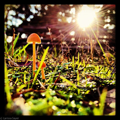Backyard Wilderness (Larssa) Tags: autumn sun canada green nature mushroom yard square britishcolumbia fungus saltspringisland homesweethome 2012 iphone instagram