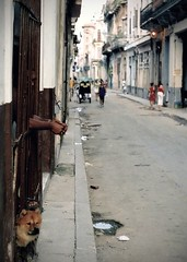 hands through bars 2 (Mr.  Mark) Tags: street dog man fence photo hands bars stock havana cuba vieja markboucher