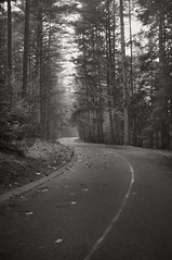 S Curve Road (frntprchprss) Tags: road blackandwhite woods scurve easthampton blackwhitephotos nonotuckpark fixedshadows jamesgehrt