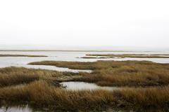 Salt Marsh Trail, Halifax, Canada (bm^) Tags: ca travel canada nature nova zeiss landscape nikon cole harbour salt natuur reis trail carl marsh scotia reizen planart1450 d700 zf2 planar5014zf nikond700 начинизавиждане