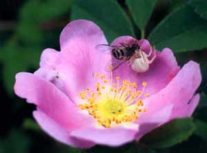 Photo - Insects on Flower