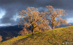 Two Oaks, Last Light (James L. Snyder) Tags: california ranch park old blue trees winter sunset two orange usa sunlight foothills mountain painterly storm green grass horizontal clouds last rural gold golden intense quercus moody afternoon veiled cloudy bare branches pair country hill rustic sanjose stormy valley bayarea late brooding february deciduous hillside obscured oaks stark grassland chiaroscuro 2009 atmospheric shrouded gnarled gleaming steep mthamilton dormant severe intricate clinging spectacle statuesque santaclaracounty countypark magiclight diablorange josephgrantcountypark hallsvalley artistslight treesonhills canadadepalatrail ranchocaadadepala caadadepalatrail loshuecostrail