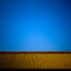 Forbidden City, Beijing, China (Eric Lafforgue) Tags: china travel blue roof sky color colour history architecture square outside photography asia day outdoor beijing bluesky nobody nopeople unesco copyspace  forbiddencity kina chin cina chine buildingfront worldheritage xina  eastasia  pekin capitalcity tiongkok  chiny  kna in buildingexterior colorpicture placeofinterest internationallandmark traveldestination   trungquc na   kitajska tsina  mg0333     traditionallychinese