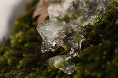 art glace19 (bulbocode909) Tags: automne glace mousse