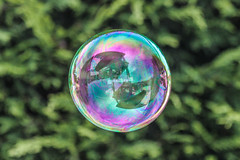 """Look into my Crystal Ball"" (Mikeinwayne...On and off...) Tags: iridescent iridescence colorful globe orb bokeh soapbubble jerseyshore bubble bright round circle dof depthoffield outdoor purple green"