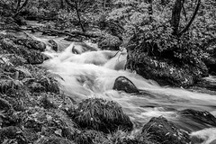 Headwaters (moaan) Tags: towada aomori japan jp water stream creek forest oirase oiraseriver bw monochrome canoneos5dmarkiii ef50mmf12lusm utata 2016