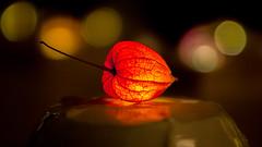 Lightning Ground Cherry (gyarasun) Tags: bokeh light groundcherry beyondbokeh