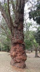 20160811_112314 (filipealves1) Tags: sopaulo trees nature natureza parque ibirapuera brazil brasil