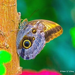 I see you (   (Thank you, my friends, Adam!) Tags: adamzhang  telephoto nikon dslr         lens central florida wildlife macro closeup flower beauty curve fine art photography photographer excellent gallery    ngc butterfly key west keywest