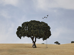 LA CASA DEL RBOL (oroyplata.) Tags: fine landscape palette birds conceptual window home house wild selfportrait oroyplata cerrete cuenca escalera smoke three arbol rafa macas