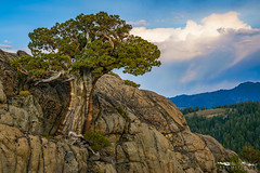 08182016_a7rii_DSC04877-621.jpg (Tactile Photo | Greg Mitchell Photography) Tags: landscape soft eldoradocounty clouds bluesky carsonpass lonetree sierranevada tree california august thursday granite color pine sunset light