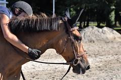 DSC_0826 (2) (ploufjf_64) Tags: paus show jumping chevaux pau 2016