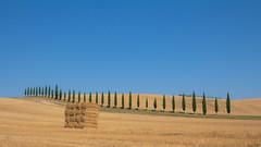 val d'orcia (Ale POT) Tags: valdorcia toscana paesaggi campagna pienza