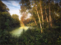 Forest pond. (odinvadim) Tags: landscape igcaptureslandscapes evening clouds iphoneart iphoneonly sunset enteredinsyb iphone old pond forest instapickskyart travel textured textures river painterly