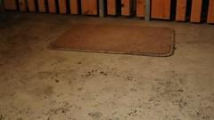 MVI_8154 (dirtyfeet6811) Tags: feet soles barefoot dirtyfeet dirtysoles blacksoles