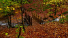 Before The Night (stephenb19) Tags: 2015 autumn pitlochry winter highlands scotland autumnal fall orange leaves yellow rust wet trail woods woodland forest rain river trees sticks