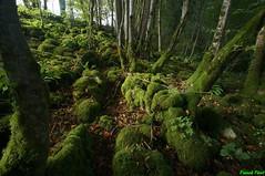 Lapiaz du bois des Essarts - Fertans (francky25) Tags: lapiaz du bois des essarts fertans franchecomt doubs karst